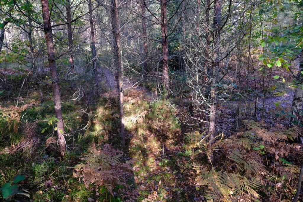 Ellujäämiskurusus Padise metsas Kallaste Turismitalu