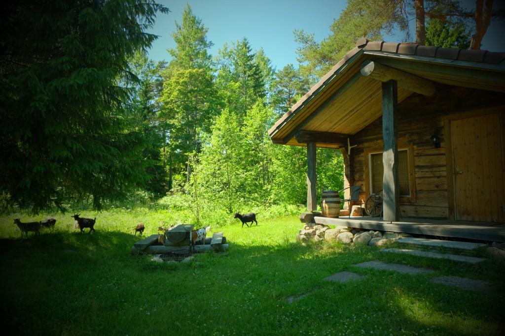 Избушка Хилья tareke Hilja Holiday resort in Padise, Harjumaa - only 45 km from Tallinn www.kallastetalu.ee Kallaste Turismitalu OÜ - metsapuhkus kauni looduse keskel - acc