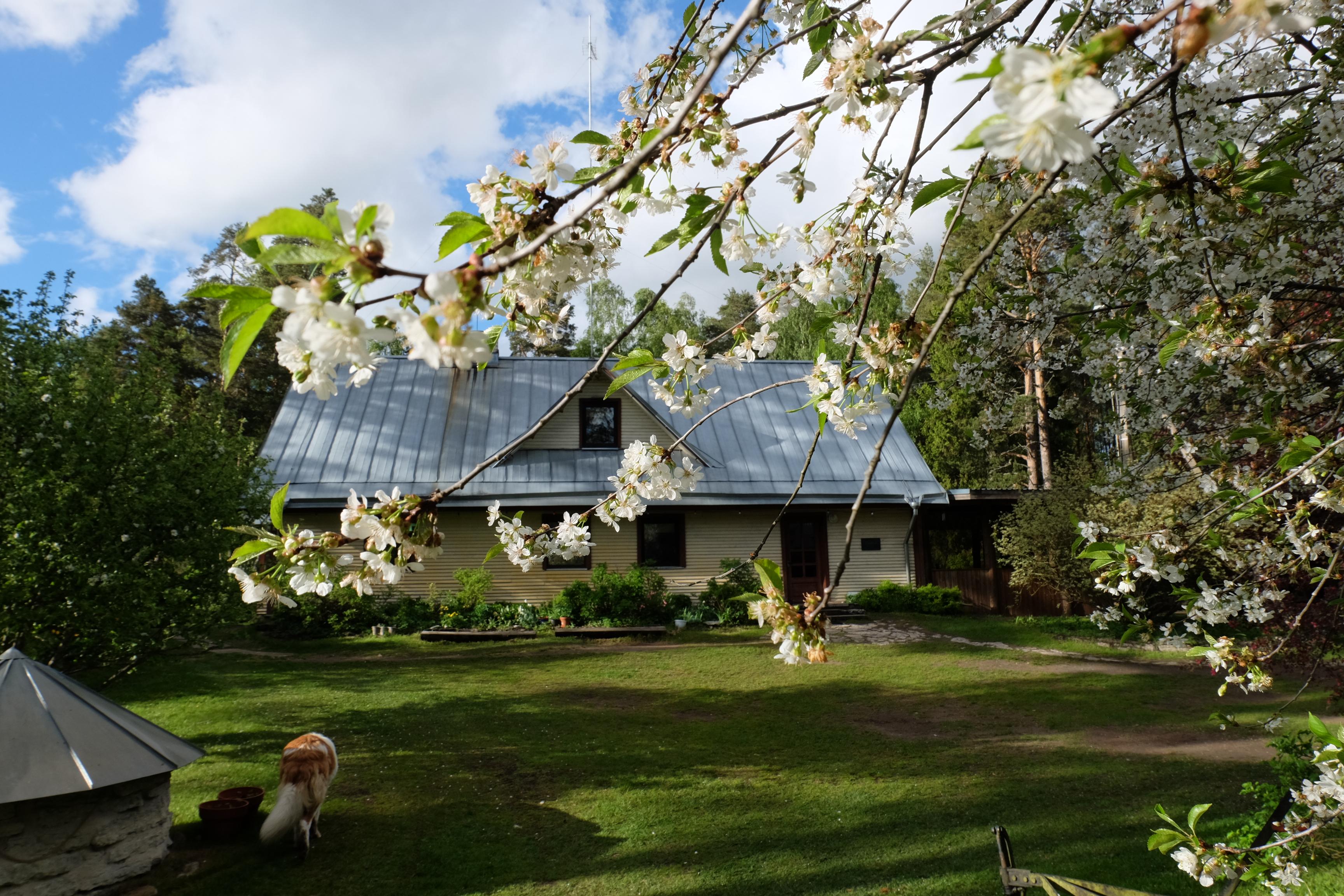 Kallaste Turismitalu peamaja 2015 kevad suvi - www. kallastetalu.ee Ärksa hingega talu Padisel Harjumaal - puhkemaja ja aktiivne puhkus, saun