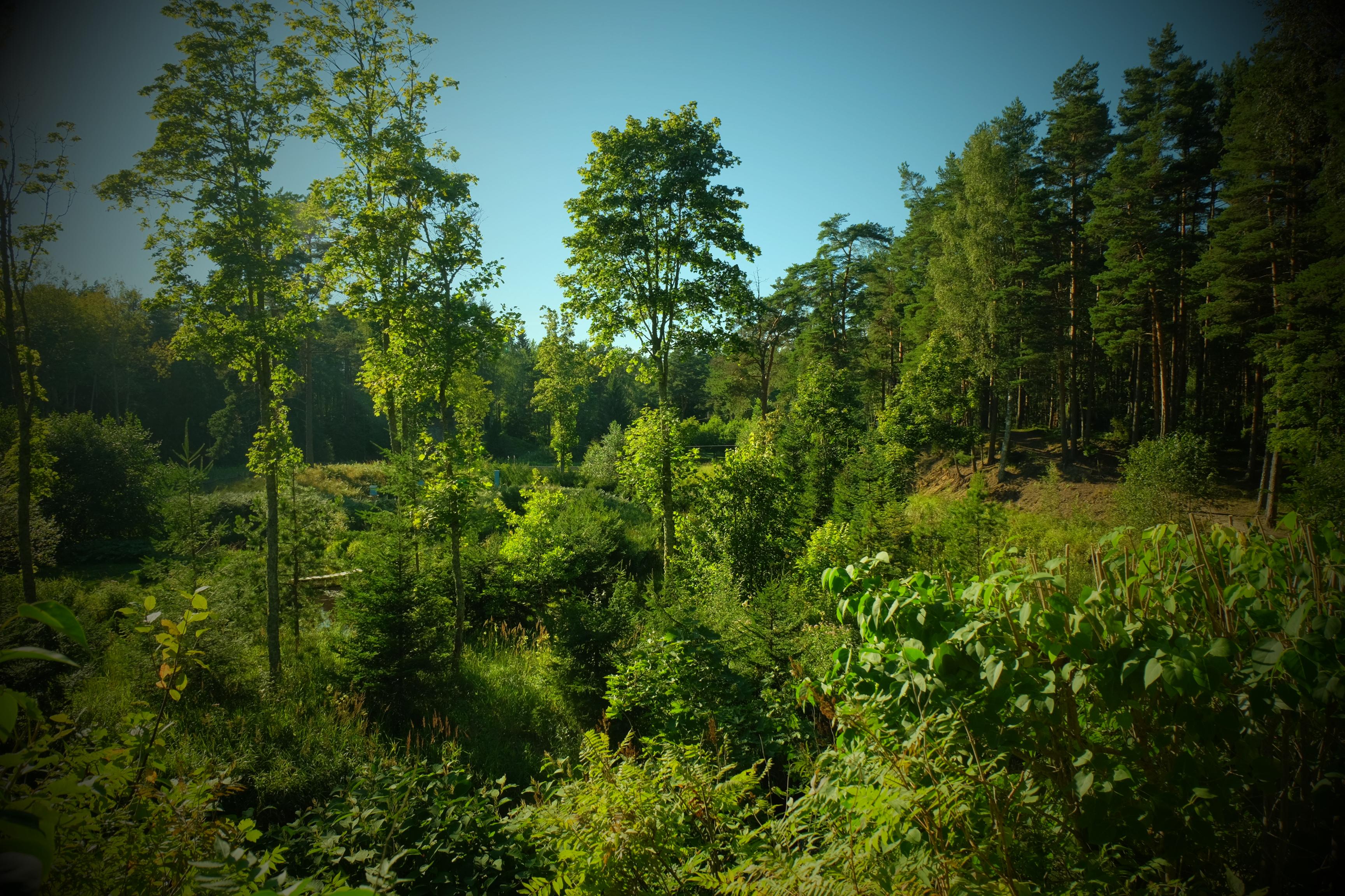 loodusgiidiga matk metsik vaade Kloostri jõele ja ürgorule suvel www.kallastetalu.ee majutus Harjumaal vaid 45 km Tallinnast - majutus - toitlustus - seminarid