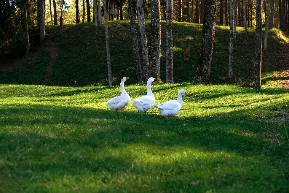 Telkimine Kallaste Turimsitalus Padisel Harjumaal. Telkimisekoht ilusas looduses. Olemas kõik vajalik. Ujumiskoht, saun, toidu valmistamise võimalused