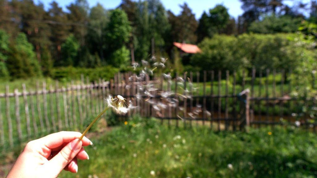 photo hunt - fotojaht suveaeg on käes - Sügis tuleb ! - Kallaste Turismitalu pakub erilisi elamusi- tule ja saa osa - Ärksa hingega talu - www.kallastetalu.ee