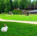 kalju-lava-jnes-suvi-rohelus-imeline-loodus-elamustalu-loomapark-lkkeplats-kallaste-talu-turismitalu-holiday-reosrt
