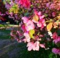 kevadised-ied-kallaste-talu-romantika