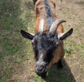 kits-kallaste-turismitalus-padisel-harjumaal-turism-puhkemaja-loomapark-seikluspark-wwwkallastetaluee
