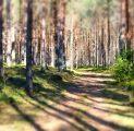 mets-ilus-loodus-kevad-tule-puhka-ja-avasta-muinashjutumets-kallaste-turismitalu