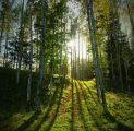 mets-kutsub-tule-metsa-eestimaa-imeline-loodus-kallaste-turismitalu-pakub-erilisi-elamusi-tule-ja-saa-osa-rksa-hingega-talu-wwwkal