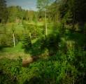 metsik-loodus-kloostrije-kallastel-rohelus-kutsub-kallaste-talu-rksa-hingega-talu-harjumaal-wwwkallastetaluee-kallaste-talu-turismita