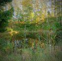 saun-tiigid-ja-imeline-loodus-kallaste-turismitalu-pakub-erilisi-elamusi-tule-ja-saa-osa-rksa-hingega-talu-wwwkallasteturismitalueee