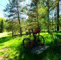 suvine-loodus-rohelus-taluasjade-muuseum-elamustalu-aktiivne-puhkus