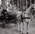 ideaalne-pulmadeks-kalessi-vi-vankrisit-padise-kallaste-turismitalu-rksa-hingega-talu-wwwkallastetaluee-also-ideal-wedding