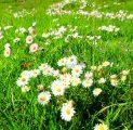 lilled-lillevaip-suvi-kevad-romantika-puhkus-kallaste-talu-turismitalu-holiday-resort