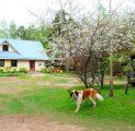 peamaja-kevad-koerake-sbralik-kallaste-talu