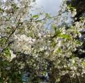 romantika-in-padise-harjumaa-only-45-km-from-tallinn-wwwkallastetaluee-kallaste-turismitalu-o-metsapuhkus-kauni-looduse-keskel