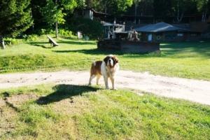 Kallaste Turismitalu kallastetalu.ee koer Rommi kalju-lava