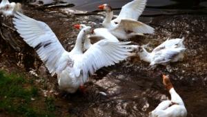 Kallaste Turismitalu kallastetalu.ee loodus puhkus haned elamustalu illustreeriv