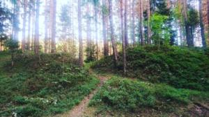 Kallaste Turismitalu kallastetalu.ee loodus puhkus mets rada illustreeriv