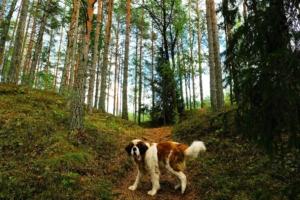 Kallaste Turismitalu www.kallastetalu.ee koer Rommi mets rada loodus puhkus