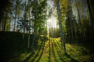 Mets kutsub - tule metsa ! - Eestimaa imeline loodus - Kallaste Turismitalu pakub erilisi elamusi- tule ja saa osa - Ärksa hingega talu - www.kallasteturismitalu.ee