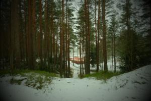 mets talv lumi johannes