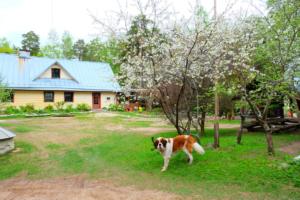 peamaja - kevad - koerake - sõbralik - Kallaste Talu
