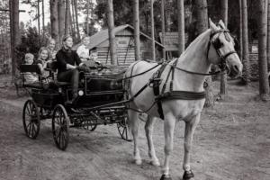 ideaalne pulmadeks! kalessi või vankrisõit -Padise Kallaste Turismitalu - Ärksa hingega talu - www.kallastetalu.ee - also ideal wedding