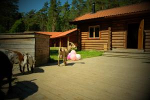 kitsed alumises kompleksis Holiday resort in Padise, Harjumaa - only 45 km from Tallinn www.kallastetalu.ee Kallaste Turismitalu OÜ - metsapuhkus kauni looduse keskel - accommodation, sauna, semina