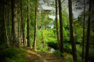 peamaja metsa seest - roheline suvi - Kloostri jõgi -ilus loodus