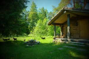tareke Hilja Holiday resort in Padise, Harjumaa - only 45 km from Tallinn www.kallastetalu.ee Kallaste Turismitalu OÜ - metsapuhkus kauni looduse keskel - acc